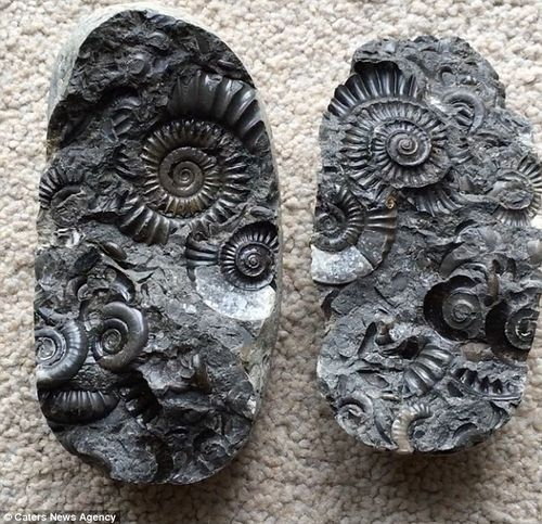 Pre School-Rocks and Fossils 16th Nov-10:30