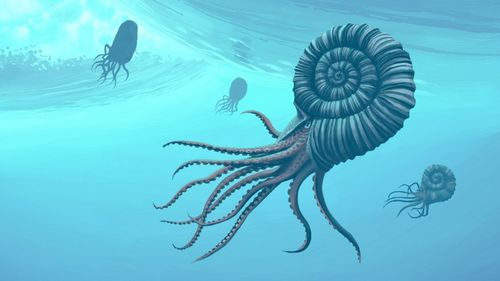 Jurassic Sea creatures/ Under the sea workshop 5th August-11am and 2pm