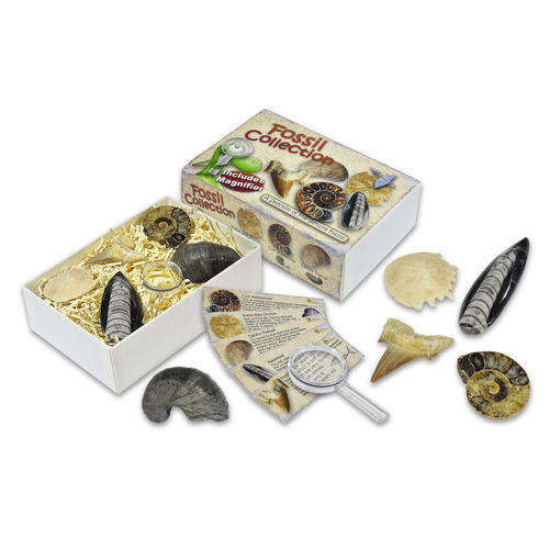 Junior Fossil Collection Box