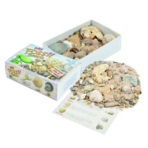 My Fossil Beach Collection Box